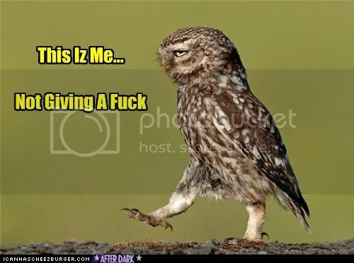 funny-pictures-owl-doesnt-give-a-hoot.jpg